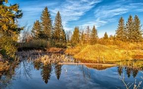 Picture forest, landscape, nature, lake