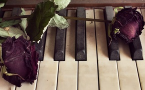 Picture flowers, roses, piano