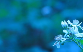 Picture flowers, branch, spring, buds, flowering