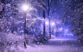 Picture winter, light, snow, the evening, lights, track, light, weather, night, winter, snow