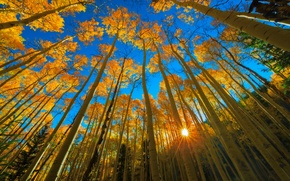 Picture autumn, forest, the sky, the sun, rays, light, trees, blue, foliage, day, USA, resort, Colorado, …