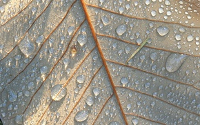 Wallpaper Nature, Drops, Sheet