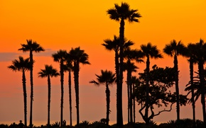 Picture beach, sunset, palm trees, the evening, CA