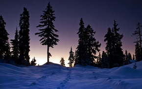 Picture winter, forest, snow, nature, the evening