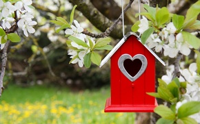 Picture Spring, birdhouse, house, flowering