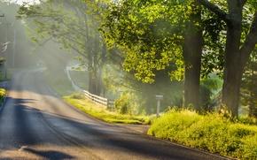 Picture road, light, landscape, fog