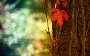 Wallpaper red, macro, sheet, tree, bokeh, trunk, bark, glare