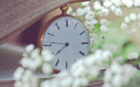 Picture macro, flowers, watch, blur, book, white, page, pocket, small, gypsophila