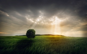 Picture field, the sky, rays, light, tree