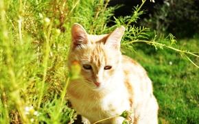 Picture cat, beautiful, mesha