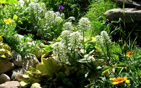 Picture greens, summer, grass, leaves, light, flowers, stones, shadow, garden, flowerbed, boulders