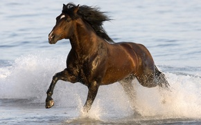 Wallpaper sea, water, animal, horse, running, sea, water, animal, 1920x1080, horse, run, horse, gee