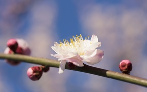 Wallpaper flower, branch, spring, petals, garden