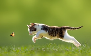 Wallpaper jump, butterfly, kitty