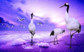 Wallpaper the sky, water, clouds, flight, squirt, birds, collage, wings, cranes