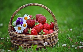 Picture grass, flowers, strawberry, basket