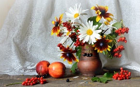 Picture chamomile, bouquet, still life, Kalina, nectarines, rudbeckia, Aronia