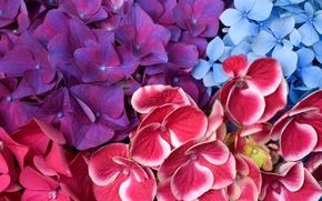 Picture macro, carpet, petals, flowerbed, hydrangea