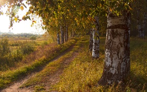 Picture road, field, autumn, trees, birch