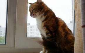 Picture cat, cats, beauty