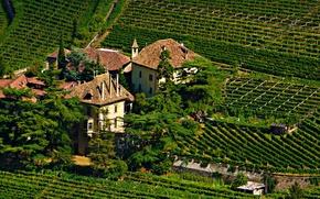 Picture photo, The city, Castle, Spruce, Italy, Field, castle Bolzano, Vinery