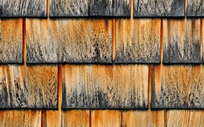 Picture roof, tree, color, shingles, roof
