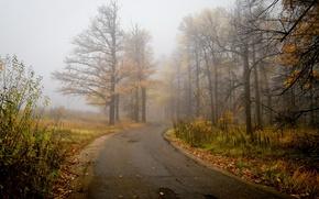 Picture road, autumn, landscape, nature, fog