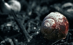 Wallpaper blood, fatasia, snail, black