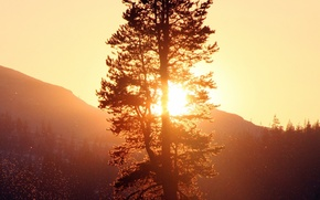 Picture forest, landscape, nature, Sunset, tree