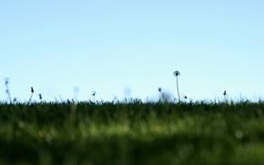 Wallpaper field, the sky, nature, minimalism, dandelions