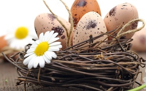 Picture chamomile, eggs, Easter, flowers, eggs, easter, nest, camomile