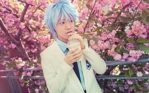 Picture Sakura, male, Cosplay, Law, No Basuan of the kur, TrustOurWorldNow, Kuroko Tetsuya