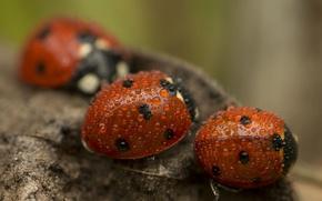 Picture drops, ladybugs, bokeh