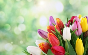 Picture flowers, bouquet, spring, tulips, bokeh