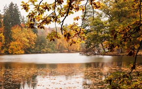 Picture trees, lake, foliage, Autumn, trees, autumn, lake, leaves, fall