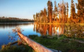Picture landscape, river, tree