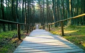 Picture Nature, Bridge, Forest, Beauty, Kaliningrad