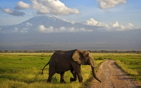 Wallpaper mountain, Africa, elephant, Kilimanjaro, Amboseli, Kenya, Savannah