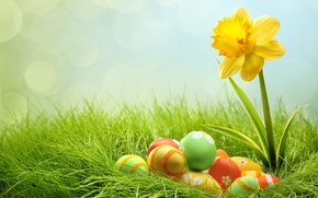 Picture grass, eggs, Easter, bokeh, Narcissus, easter
