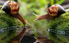 Picture water, macro, Snails