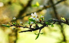 Picture macro, nature, spring, branch, flowers