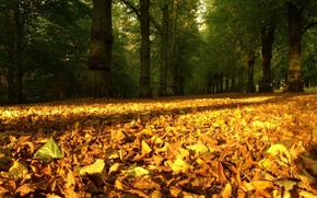 Picture nature, time of the year, autumn fallen leaves