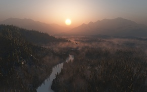 Picture forest, the sun, river, eagle