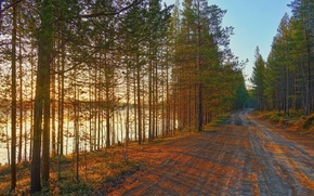 Picture river, perspective, Road, pine