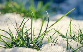Picture grass, snow, leaves