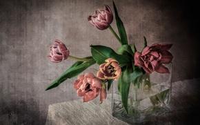 Picture bouquet, tulips, vase, tablecloth