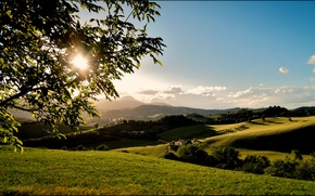 Picture the sun, tree, hills, branch, field