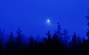 Picture forest, the sky, trees, fog, The moon