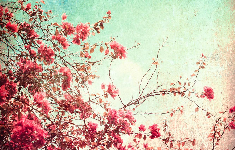 Photo wallpaper summer, the sky, flowers, paper, grain, glow, texture, day, spot, wallpaper, cardboard, ornament, material, flowering, …
