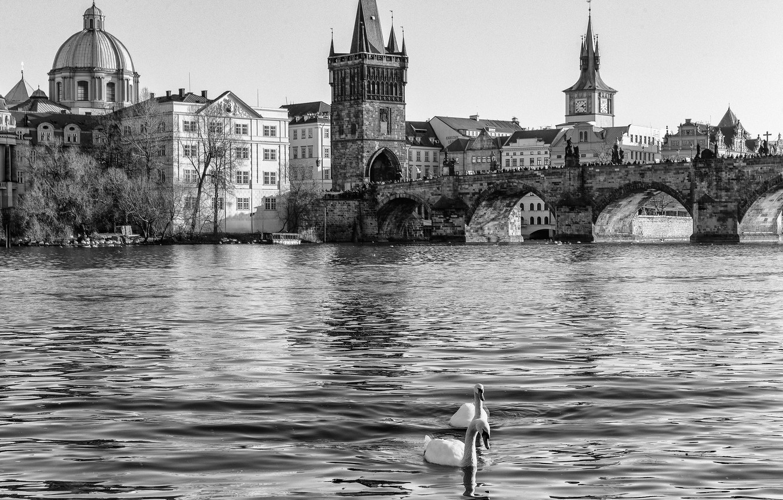 Photo wallpaper water, river, Prague, Czech Republic, black and white, swans, Prague, The Czech Republic, Vltava, Praha, …